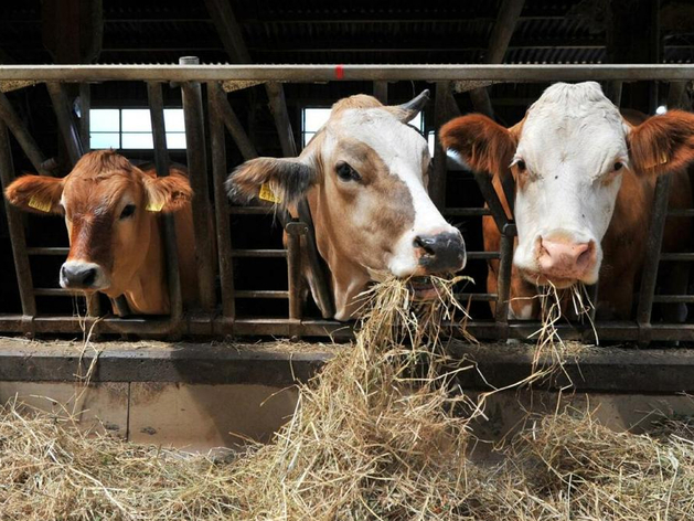 «Недобор урожая из-за жары — 50%». Тюменские власти готовы дать субсидию на прокорм коров